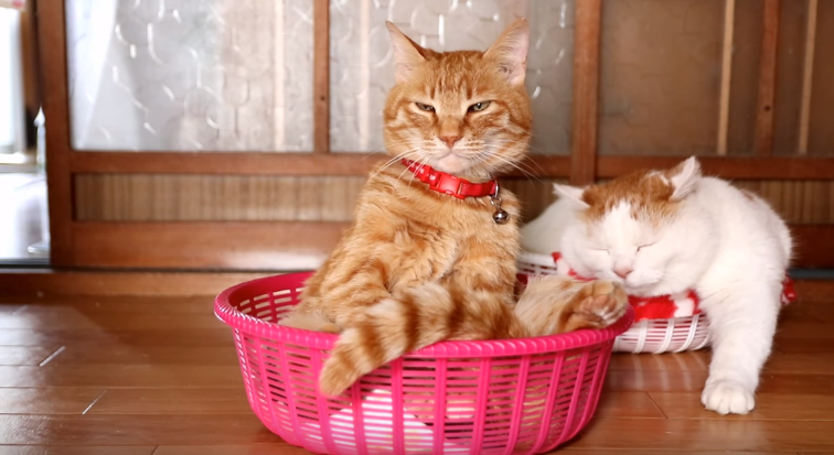These Two Cats Know To Chill