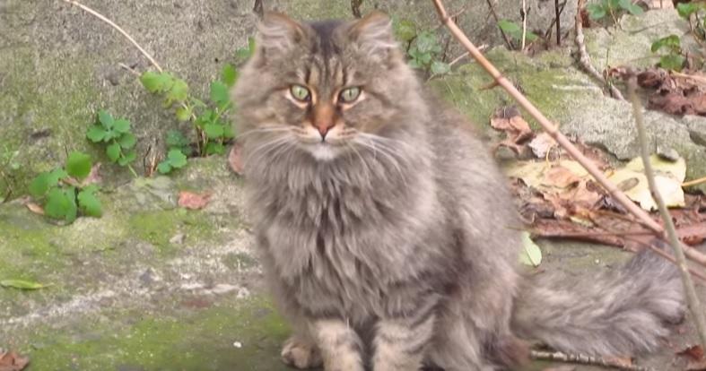 Majestic Cat On The Street