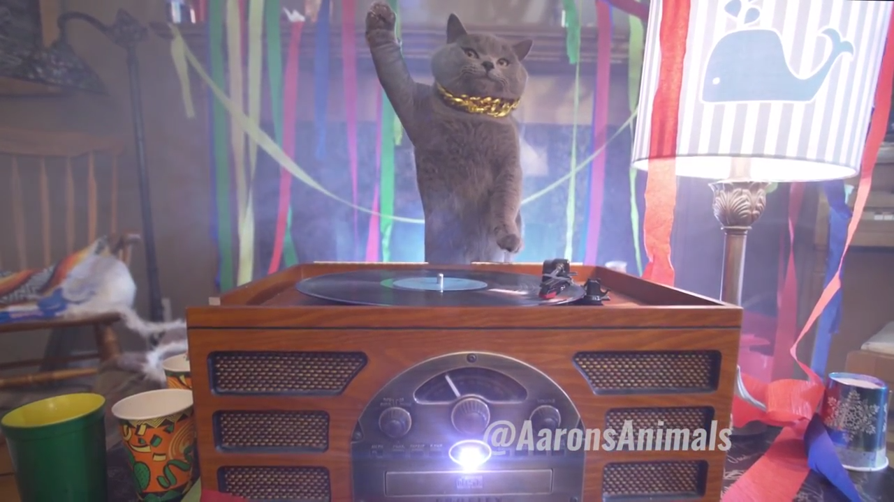 Cats drop an epic house party
