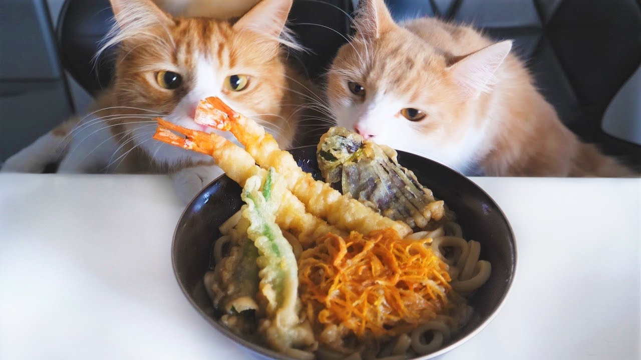 Tempura Udon Noodles - Cats as a jury