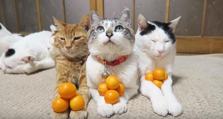 Three Zen Masters Relaxing