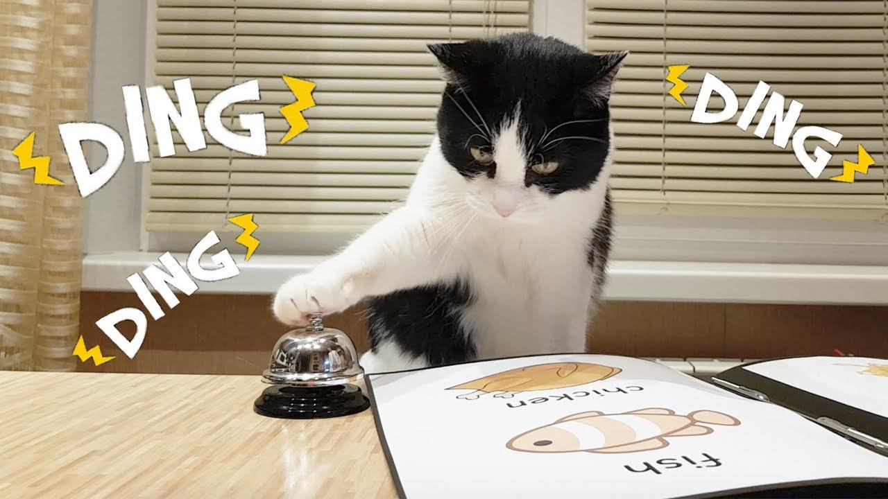Cat orders food