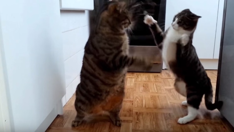 A Day With Cats In 4 Minutes