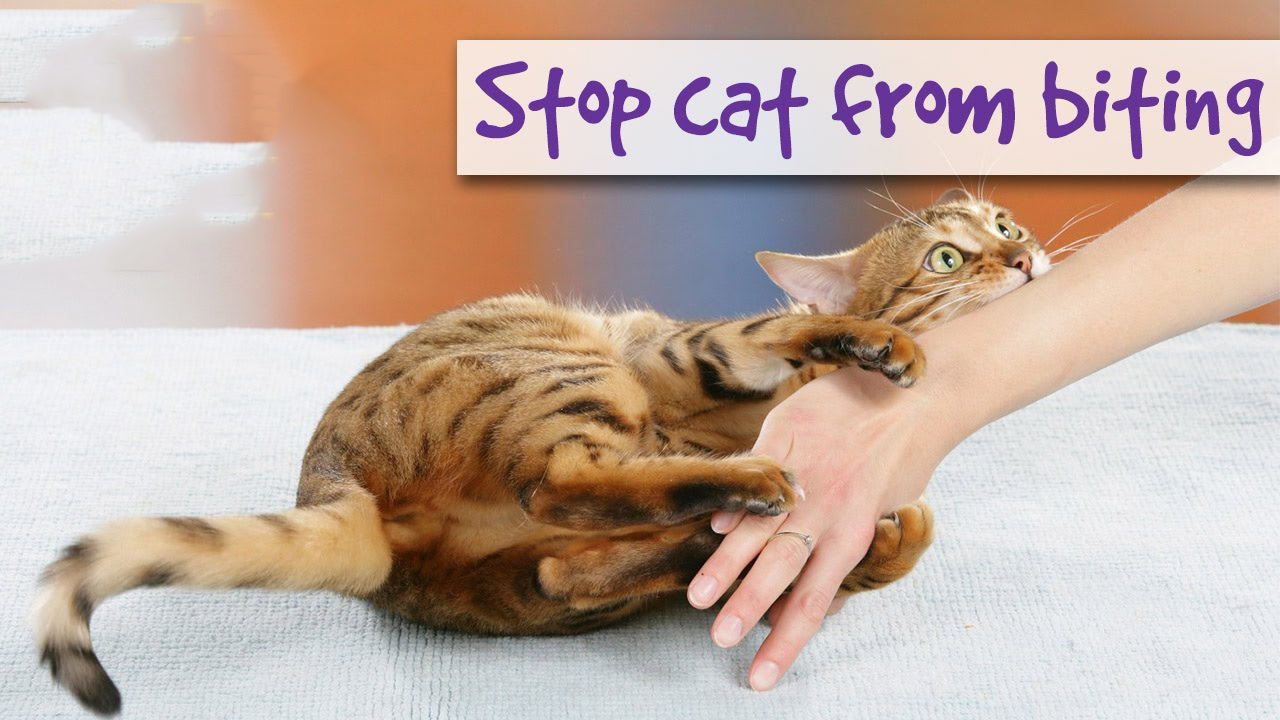 What can you do if your cat scratches or bites you