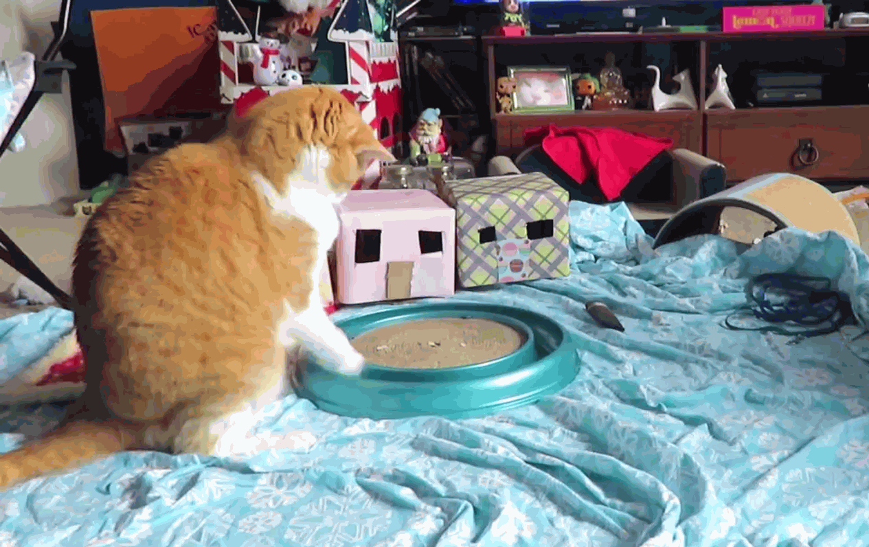 Butters having a lot of fun with a toy