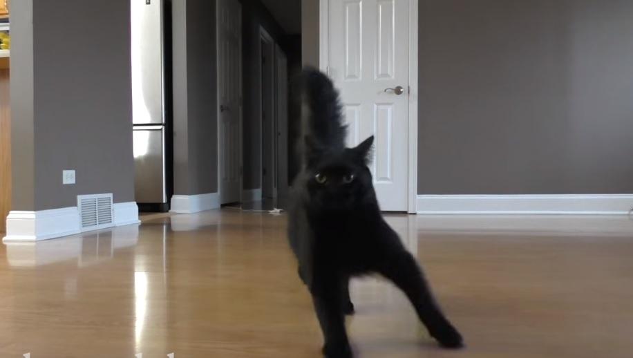 Cat Caught Ice Skating