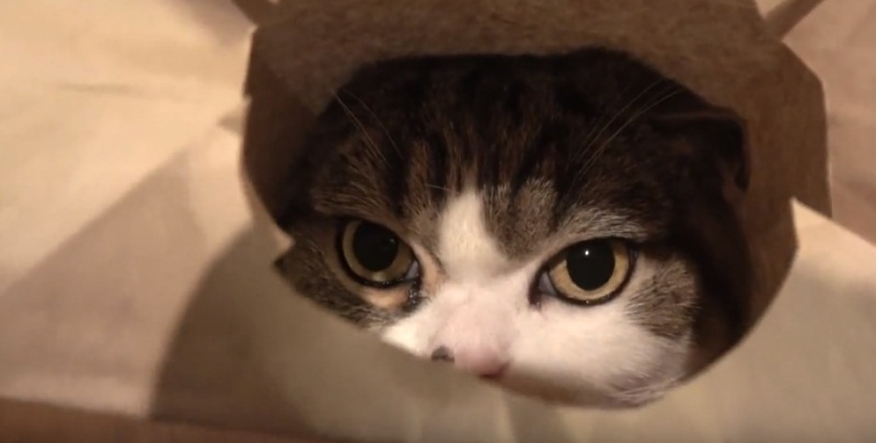 Maru Puts On His Favorite Accessory