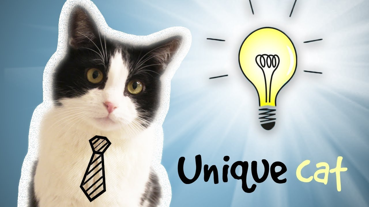 The many awesome things that Pusic, the cat, can do!