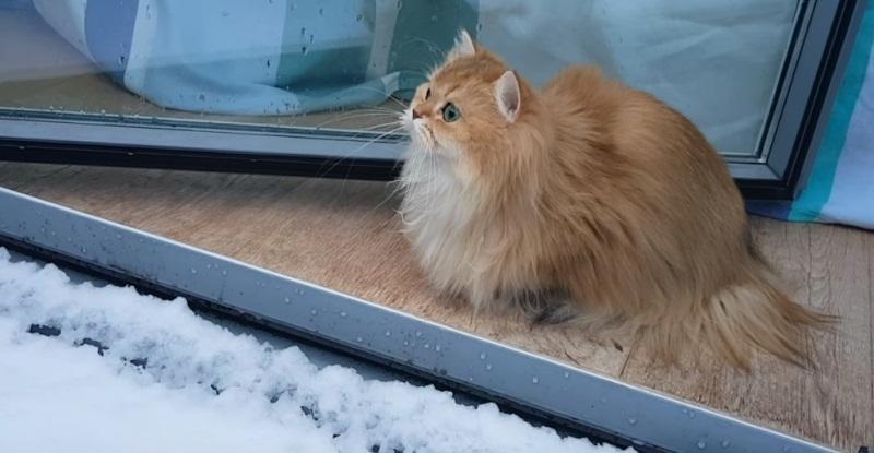 Smoothie Reacting To Snow