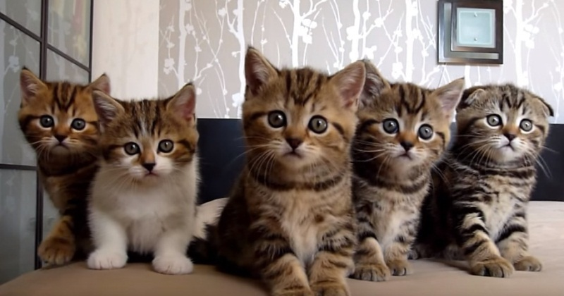 Cute Kitten Choir