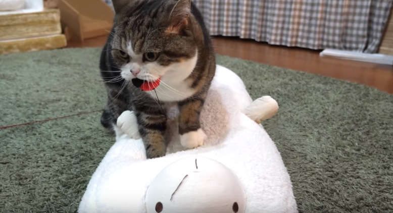 Maru Healing Sheep