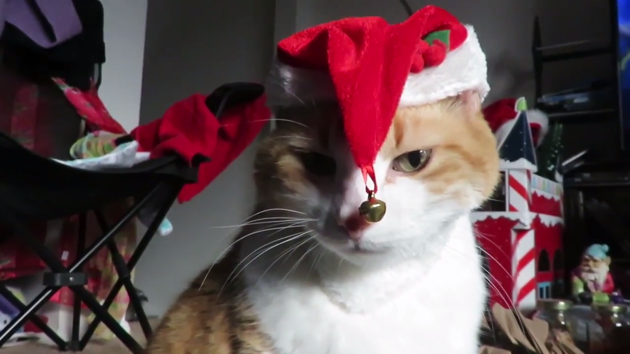 Ginger cat testing some Christmas hats for cats