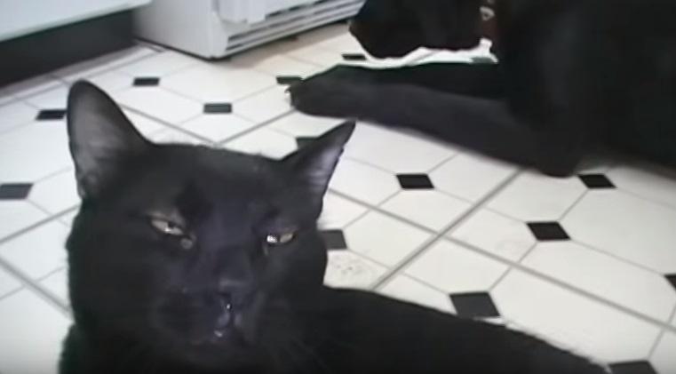 Talking Kitty Cat - Dogs Can't Talk