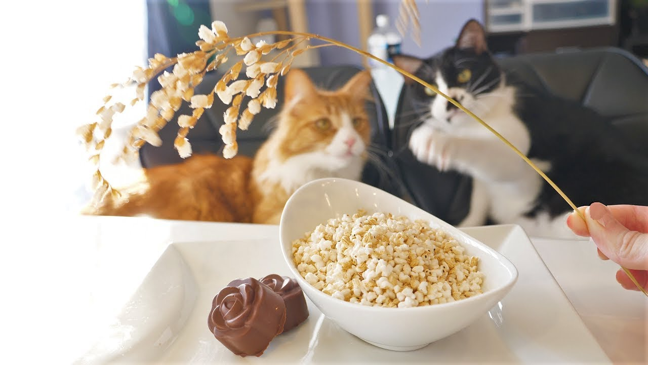Cats and cooking - Popcorn Rice