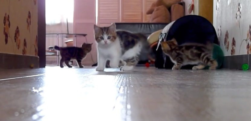 Kittens Racing, Jumping, Playing