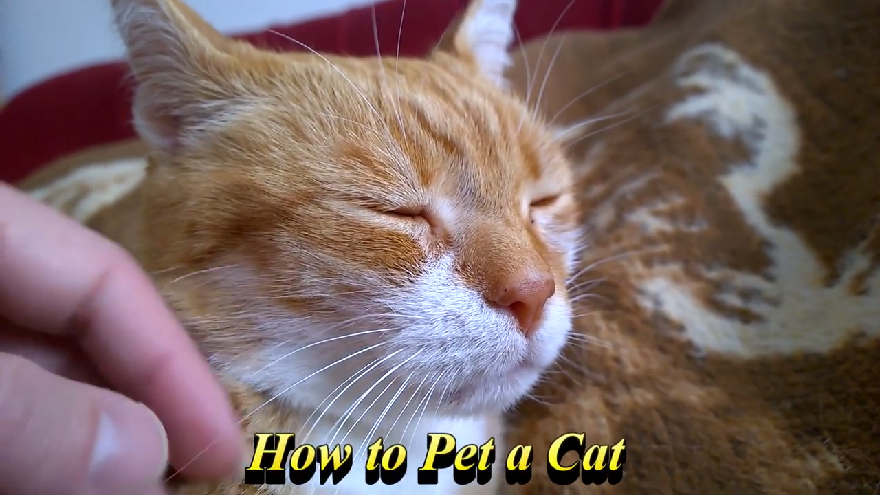 A guide on how to pet a cat