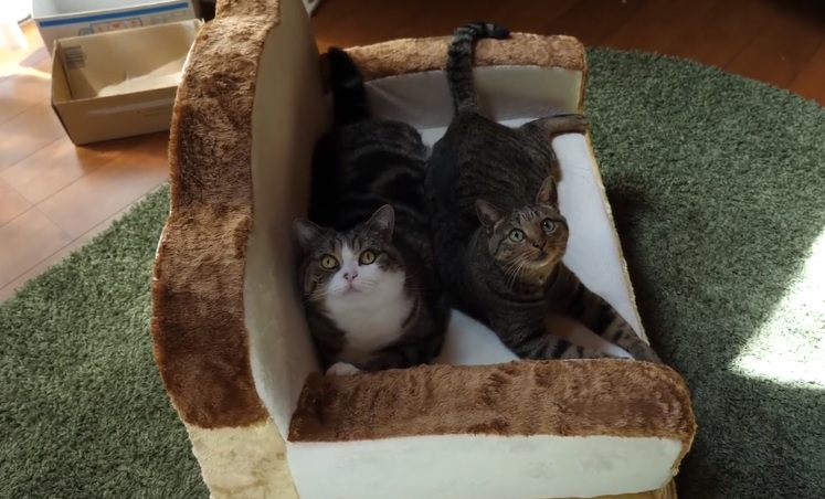 Maru And Hana Playing