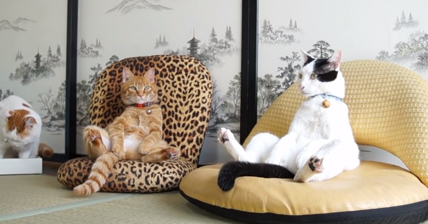 Cats Relaxing With Style