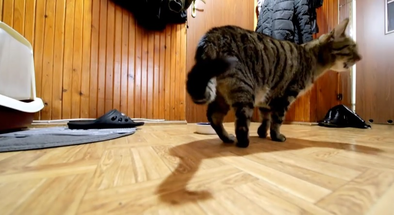 Owner Records Cat After He Leaves House