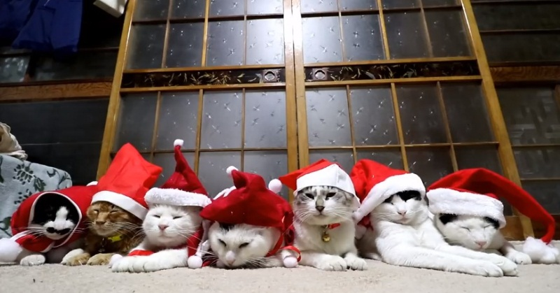 Santa Claus Hats For The Cats