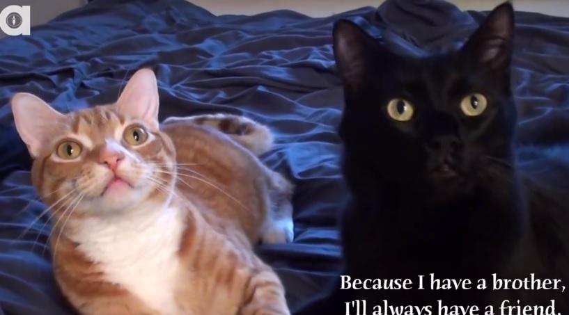 Cat Bromance, Cuteness Overload