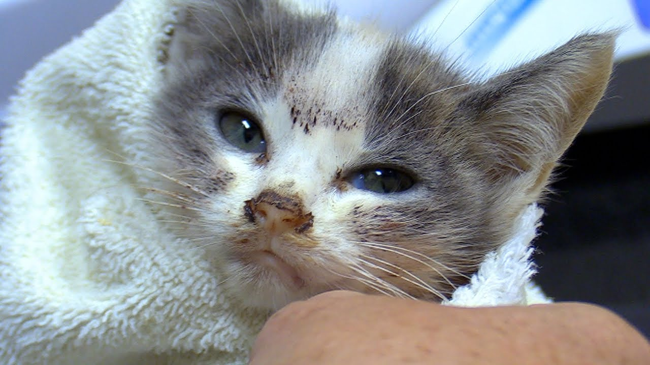 Princess - A dying kitten that received a chance to life