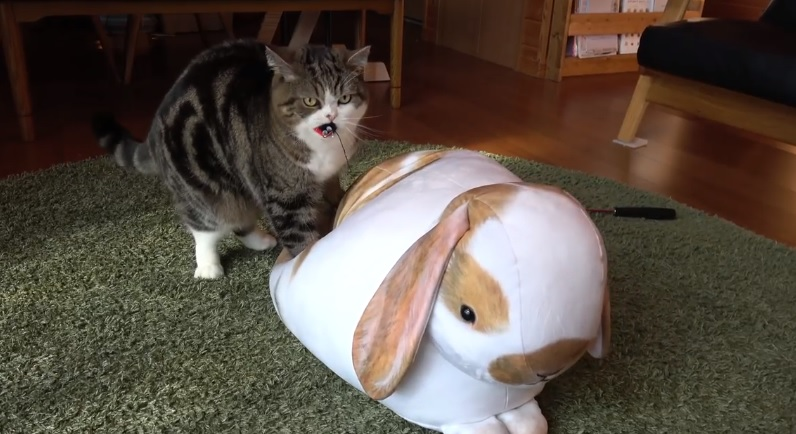 Maru Heals The Rabbit