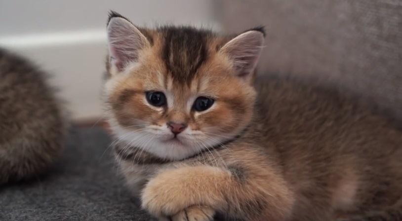 Hosico's Kittens