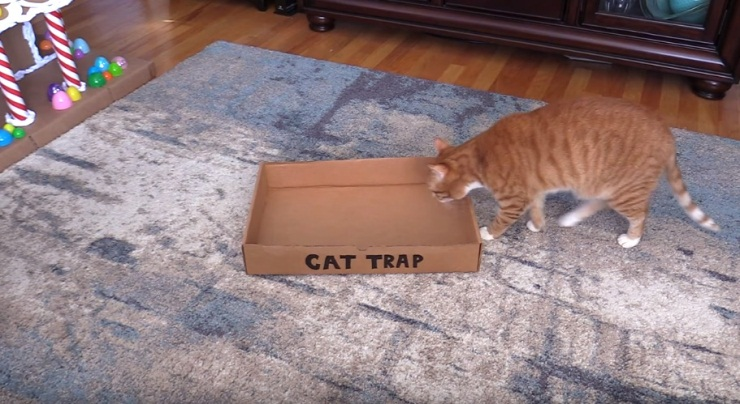How To Catch A Cat, Easiest Way