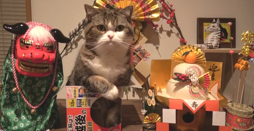 Happy New Year With Maru