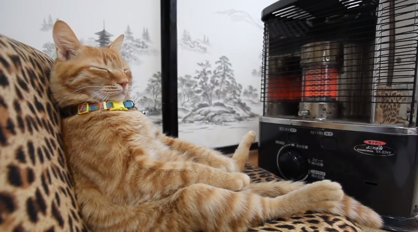 Cute Kitty Staying Warm