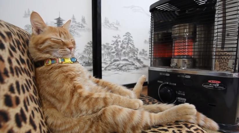 Cute Kitty Staying Warm