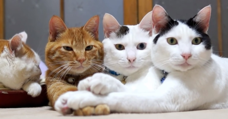 Funny Cute Cats Holding Paws
