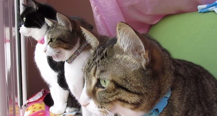 Beautiful Cats Watching Bird TV