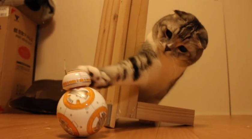 Cat Vs BB-8 Droid