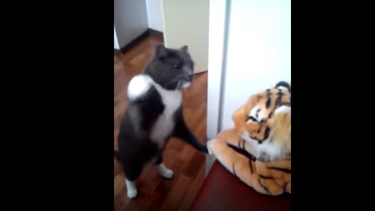 Cute Cat Vs Tiger Toy