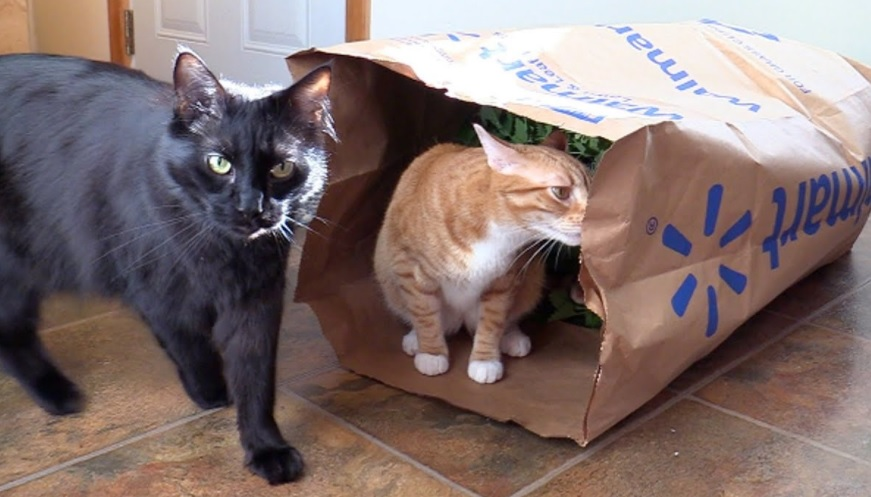 Catnip For Cole And Marmalade