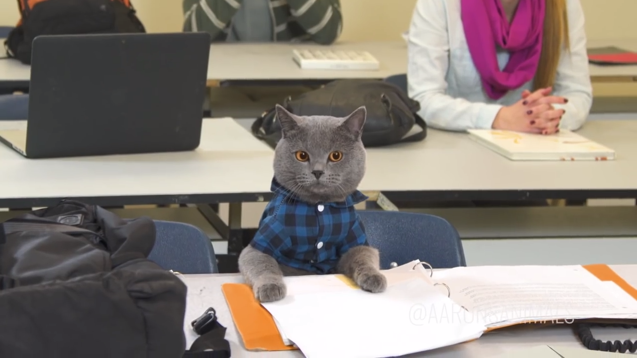 Michael, the cat, goes to school - Aaron's Animals