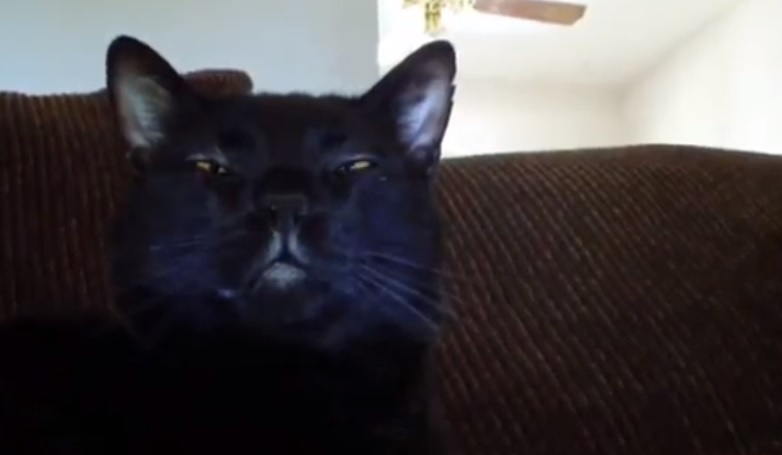 Talking Kitty Cat - A Very Angry Kitty