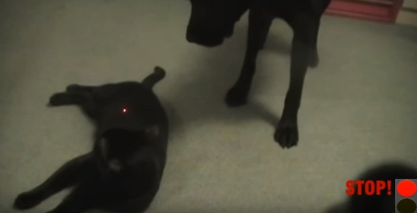 Don't Touch The Cat