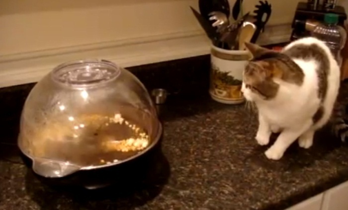 Cat Doesent Like Popcorn Machine