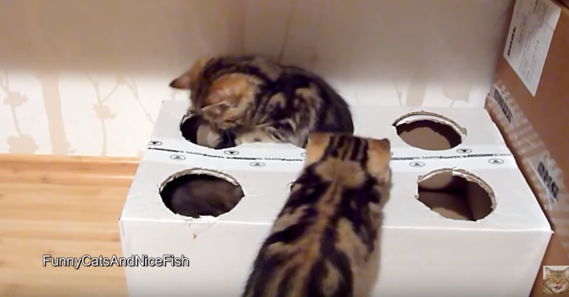Such Playful Kittens