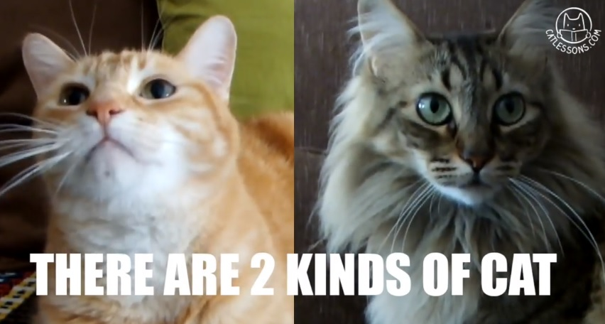 What Is Your Cat Petting Style ?