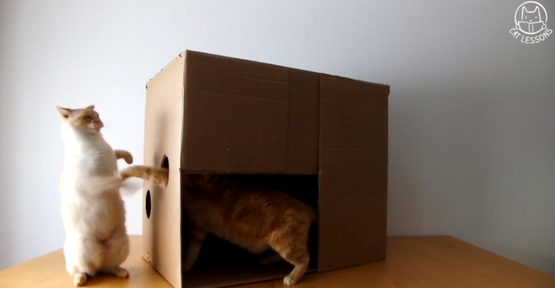 How To Make A Quick Play Box For Your Cat