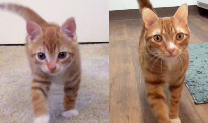 Kittens To Cats With Cole And Marmalade