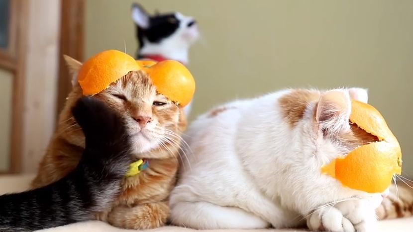 Cat Gets Photobombed