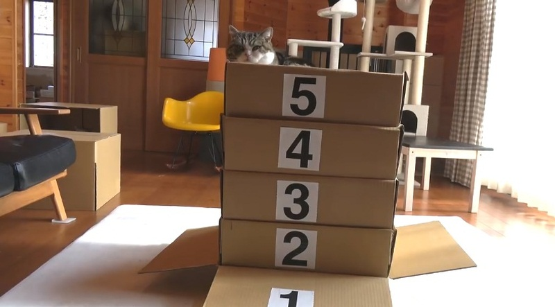 Vaulting Box And Maru