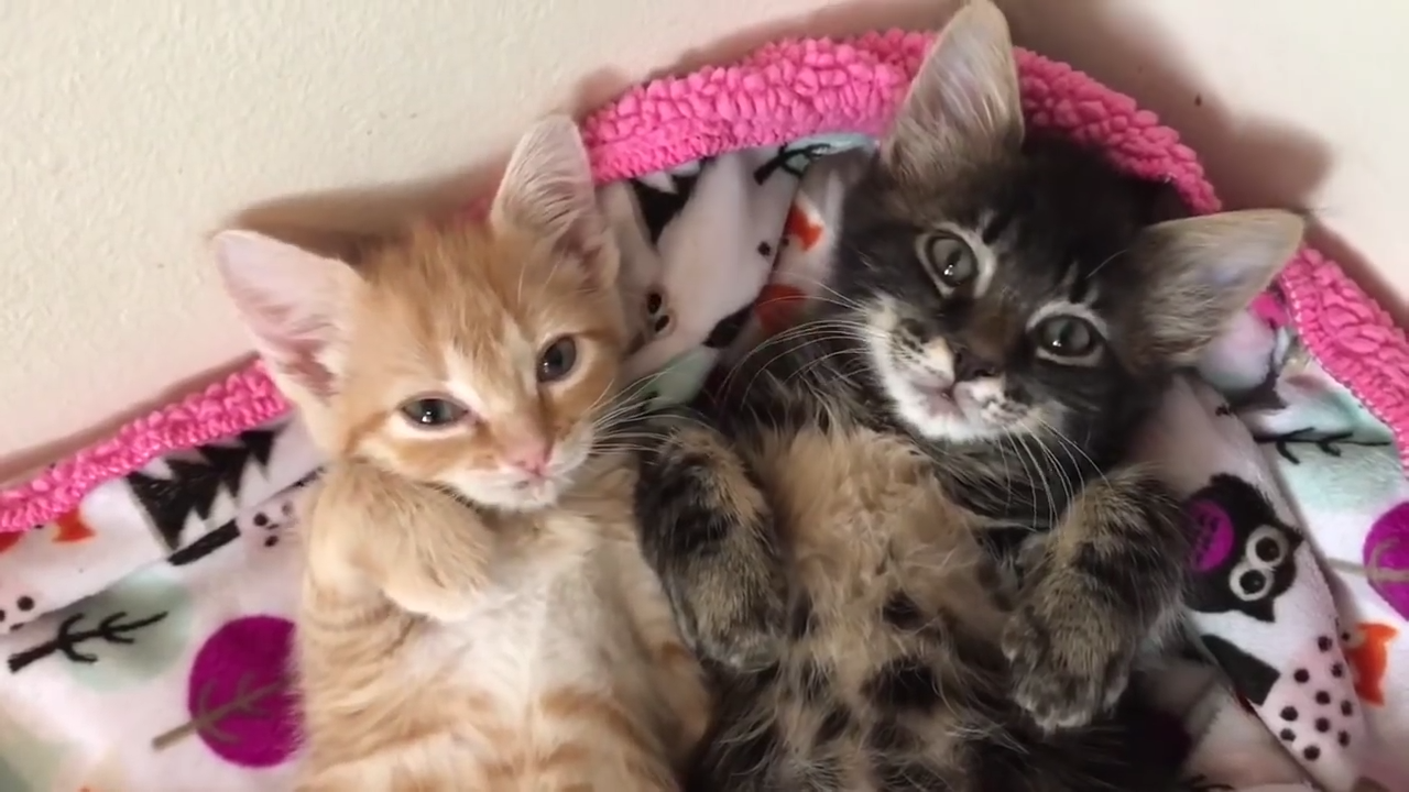 The story of two orphan kittens that became best friends