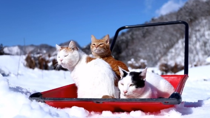 Chillout In The Snow
