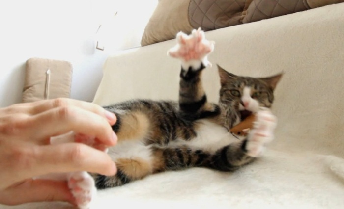 Cute Cat Reacts To Tickling